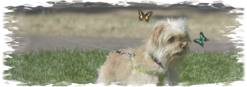 butterflies and doggies